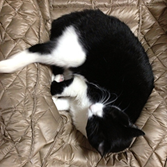 鼻を隠して寝る猫 04掻きおわった.jpg
